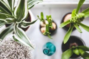 Weshalb geeignete Zimmerpflanzen Stress und Angst verringern können