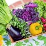 Wie die Ernährung unser Wohlbefinden steuert